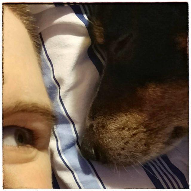 beimamaistsamschnsten jackrussell jackrusselsofinstagram dogsofinstagram