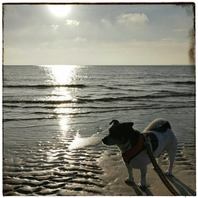 Seehund jackrussell jackrusselsofinstagram dogsofinstagram